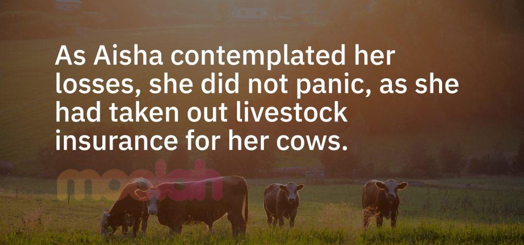livestock insurance in kenya, Livestock & Animal Insurance in Kenya, livestock insurance scheme, livestock insurance cover, livestock insurance cover policy, kenya livestock insurance program