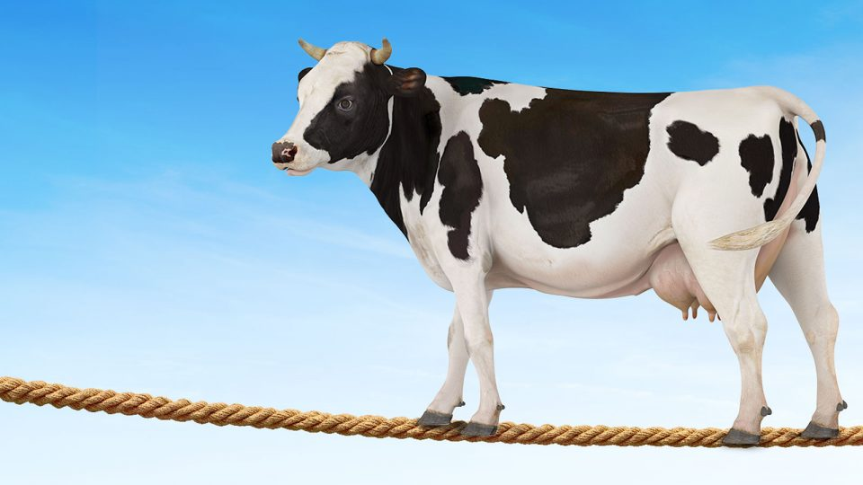 Just insure the cow: Livestock Insurance