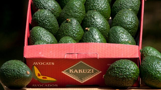 The booming avocado business with Kakuzi PLC